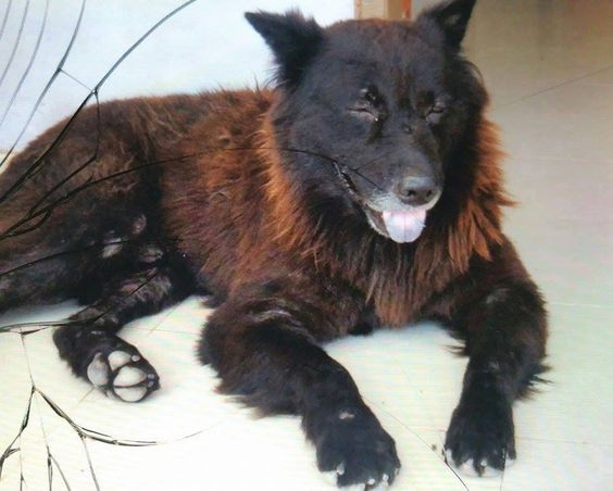 Mongrel Mixed Breed Dogs Mutt or Mutts DOGS Pinterest