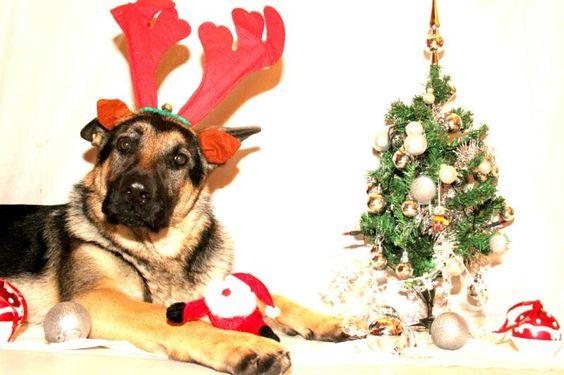 Wir wünschen Frohe Weihnachten!   SV OG-Stammheim