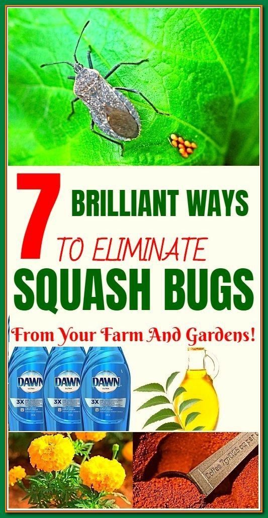 Ideas How To Create A Thriving Organic Garden In 2020 Squash