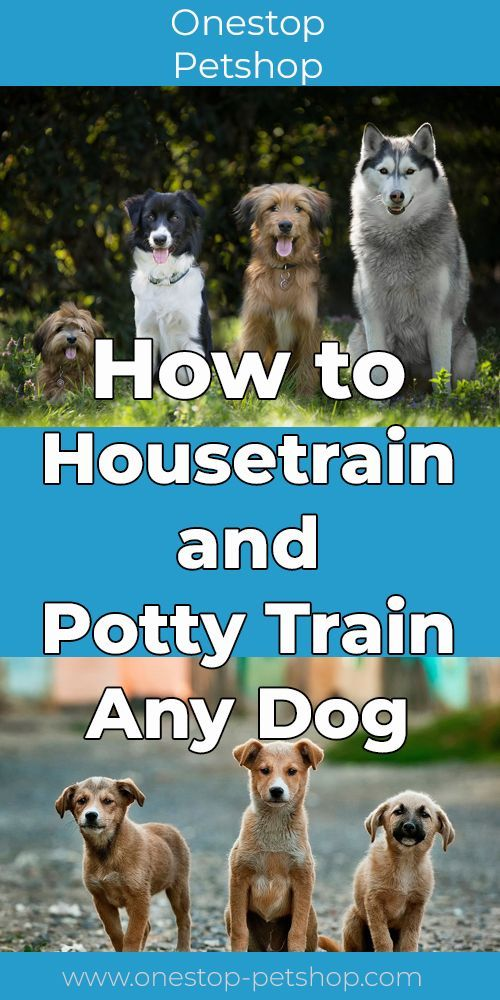 How To Housetrain And Potty Train Any Dog Dogs Training Your