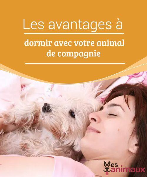 My Animals Blog Sur Les Conseils Les Soins Et Tout Ce Qui Concerne Le Monde Animal Chiot Heureux Animaux Adopter Un Animal