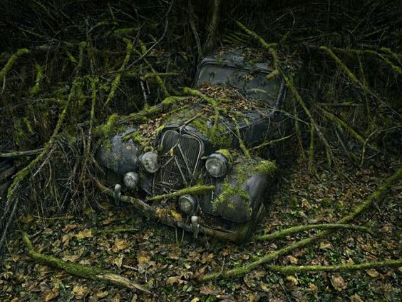 Abandoned cars in nature by Peter Lippmann ......from dust to rust