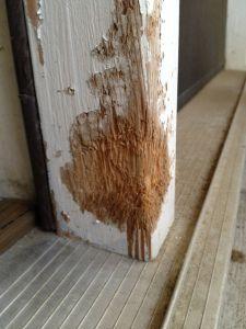Wooden Doors Door Frames And Your Dog On Pinterest