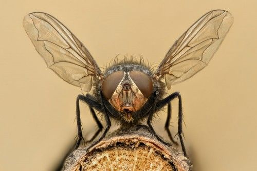 How To Get Rid Of Flies In The House Insects