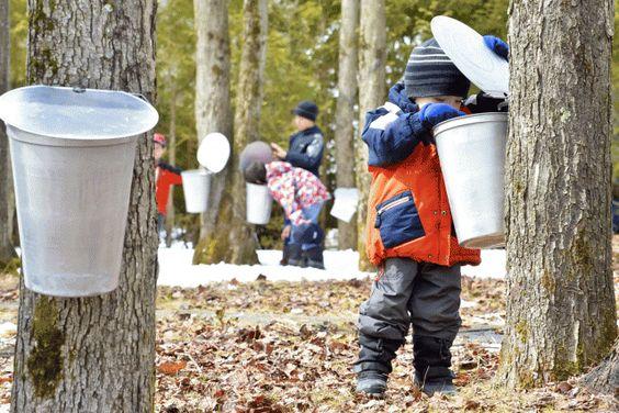 Résultats de la recherche d'images CABANES A SUCRE - Yahoo Québec