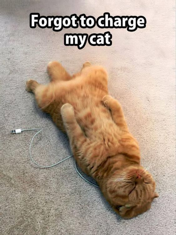 I Forgot to CHARGE my cat