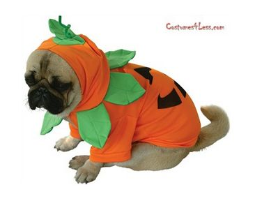 10 Adorable Dog Halloween Costumes - pumpkin costume