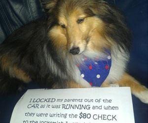Some Dog Shaming