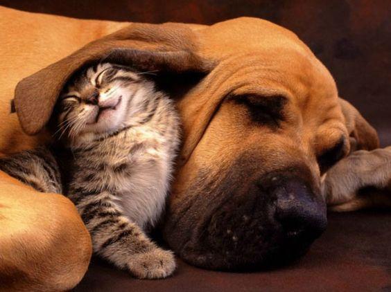 15 Adorable Animal Couples
