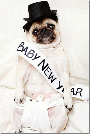 New Year pug  @Bethany Lupacchini - can you do this to Juliette if I do it to Armani? Lol:
