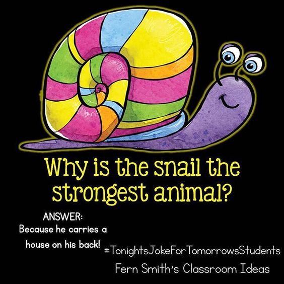 Why is the snail the strongest animal?