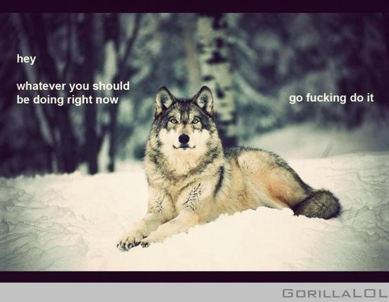Wolf based humour