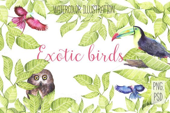 Watercolor exotic birds by Spasibenko Art on @creativemarket