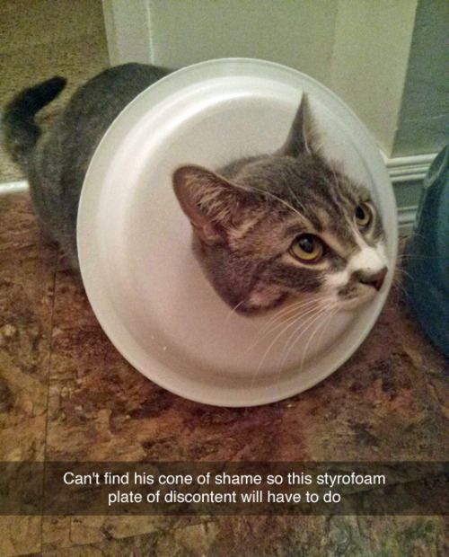 Can't find his cone of shame, so this styrofoam plate of discontent will have to do.