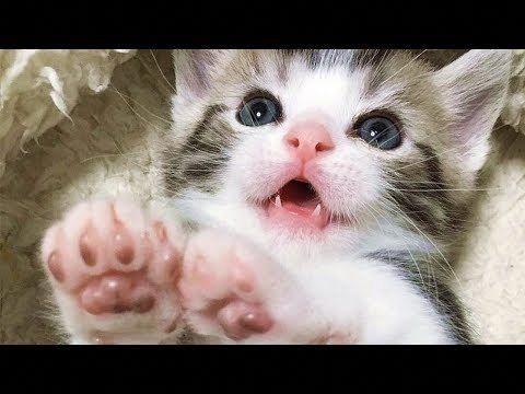 Kitty Monster Kittens Cutest Cat Has Fleas Little Kittens
