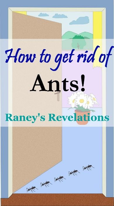 How to get rid of ants | www.raneysrevelations.com