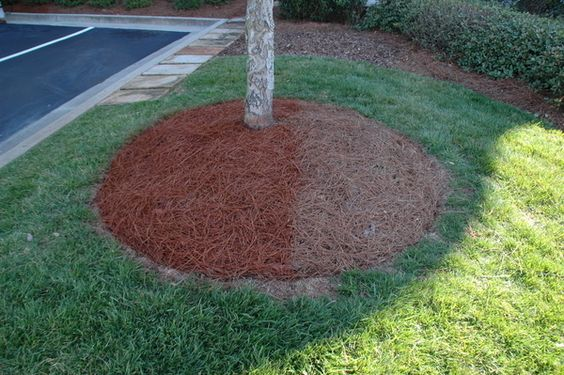Use Your Pine Needles As Mulch For The Home Pinterest