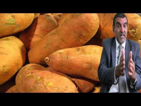 فوائد البطاطا الحلوة لا يعلمها الكتير Dr Mohamed Al Fayed محمد الفايد Fayed Youtube Sweet Potato Vegetables Food