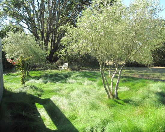 Olive Trees Front Yard Landscaping Design Pictures 400 x 300