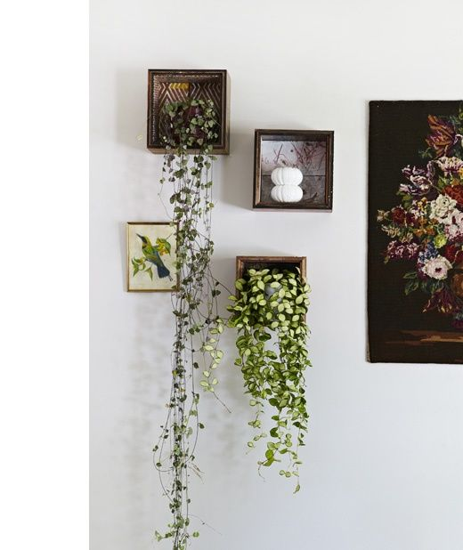 Indoor plants as gallery wall