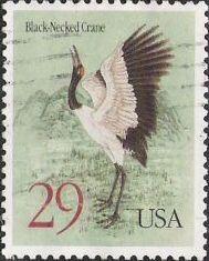 black necked crane