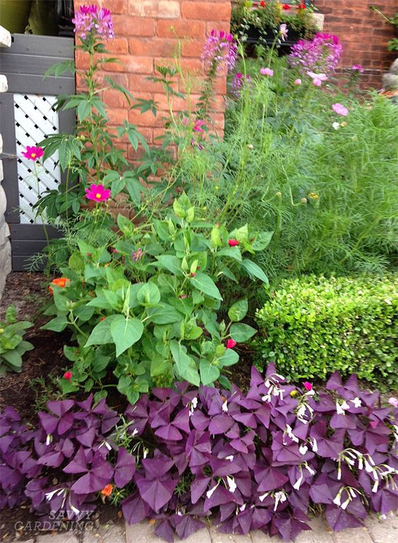 I gathered quite a few ideas for border plants, but I really loved the use of purple oxalis in this gorgeous front yard. I also made note of the pretty pink cleome!