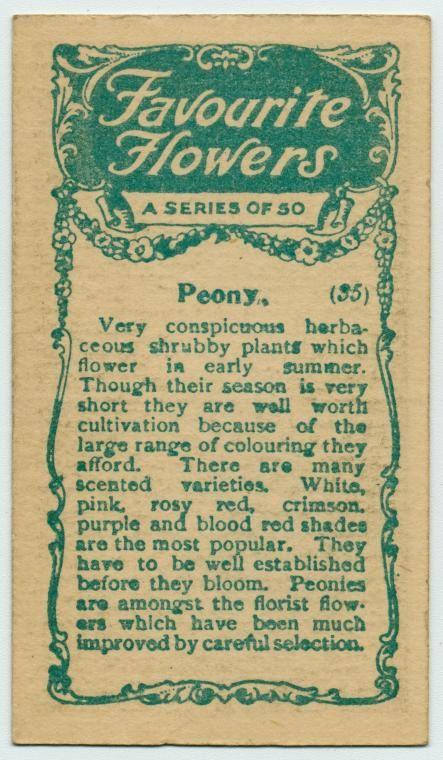 flores del sol: peonies in bloom