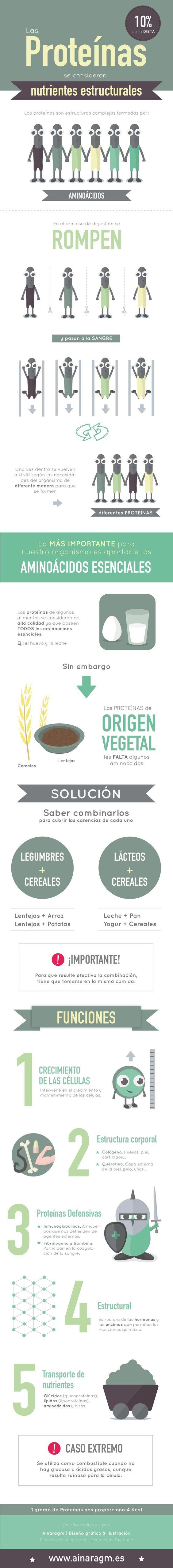 Todo lo que necesitas saber de las #proteínas en una sola imagen. #Dieta #Rebajar #Musculo