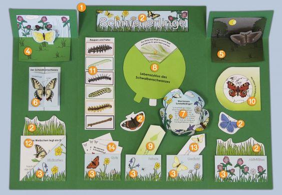 Schmetterling-Lapbook-innen-KigaPortal-kindergarten-blau