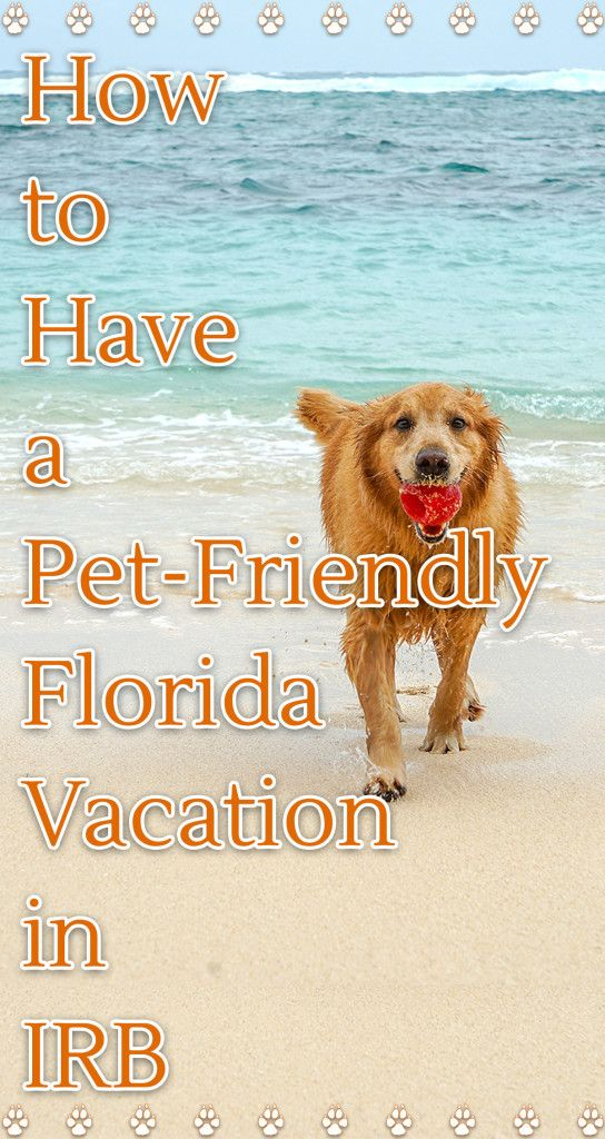 Our Favorite Pet Friendly Places In Indian Rocks Beach Florida And Beyond Your Pup Will Love Pet Friendly Beach Dog Friendly Hotels Florida Beaches Vacation
