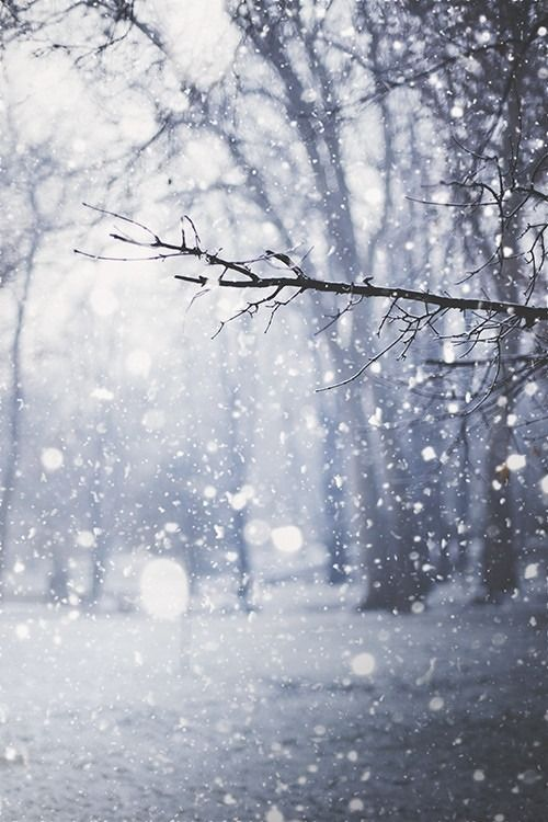 Snow was falling, so much like stars filling the dark trees that one could…