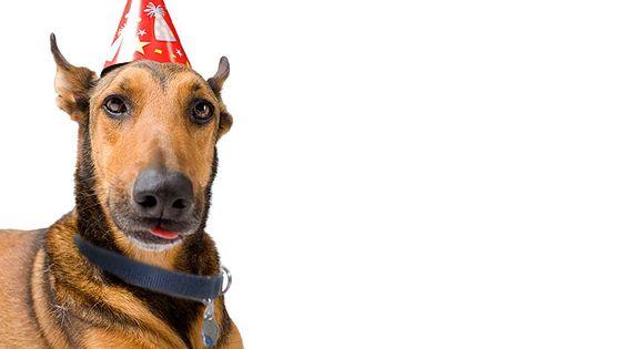 Petfinder | Pet adoption: Want a dog or cat? Adopt a pet on Petfinder