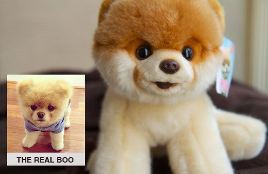 Boo the World's Cutest Dog. A new plush from GUND. Almost as cute as the real Boo.