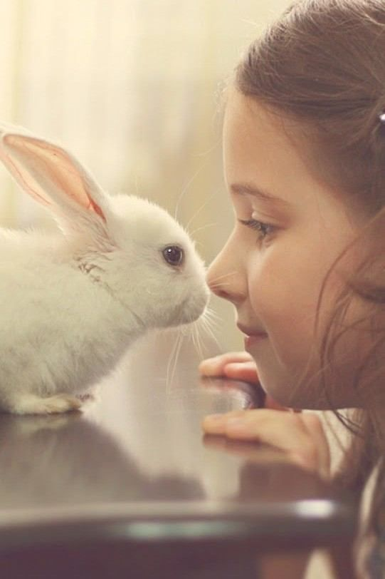 Kids And Bunnies Bunnies Beauty Photoshoot All The Stuff I Care About Cute Baby Animals Bunny Dwarf Bunnies