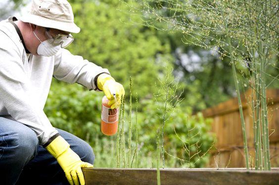 Insecticides naturels et non toxiques.