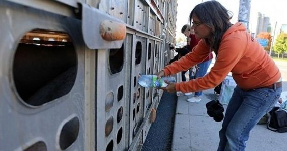 Justicia para activista canadiense que enfrenta 10 años de prisión por dar agua a un cerdo sediento