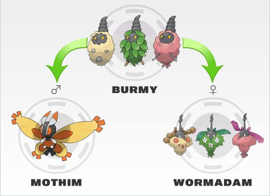 Which moves can burmy learn - answers.com