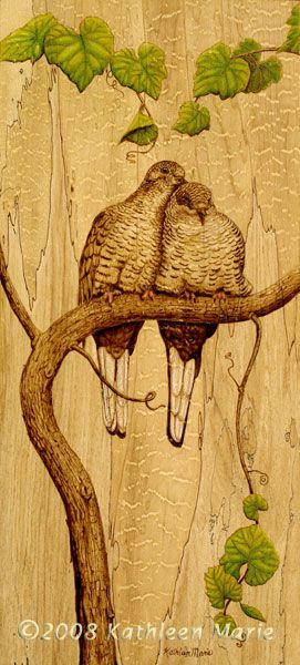 Inca doves burned on spalted maple
