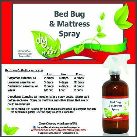bed bug spray beds and bed bugs on pinterest