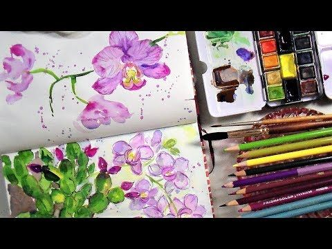 Sketchbook Sunday Loose Orchids In Watercolor Colored Pencil
