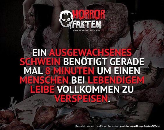 ❝Schwein gehabt❞  #horrorfakten