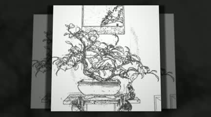 http://www.balconybonsai.com.au Bonsai Website