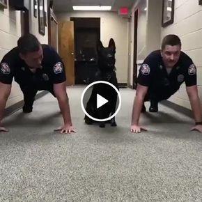 Cachorro dando uma aula de malhação