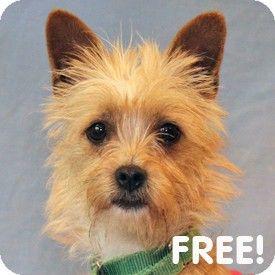 Adopt Dog Walnut Creek Ca