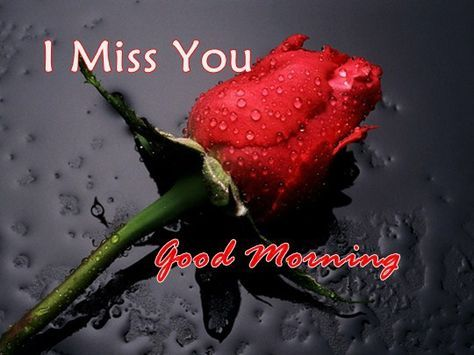 Best Good Morning Quotes For Her I Miss You Good Morning My Love Good Morning Beautiful Quotes Good Morning My Love Good Morning Romantic