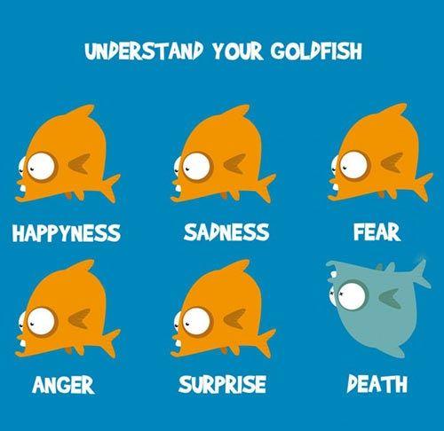 Understand your goldfish.