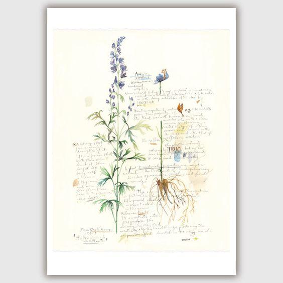 aquarelle de fleurs peintures herbes aromatiques fleuri peintures ...