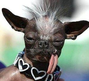 Top 10 des chiens les plus moches !