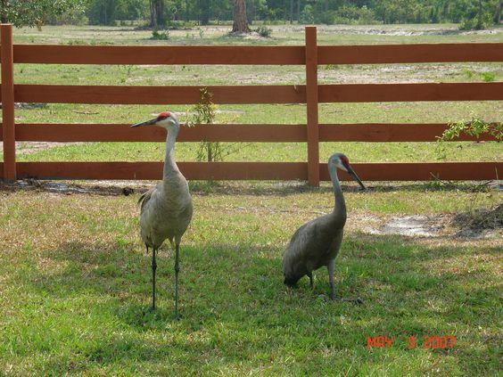Cranes taking a break