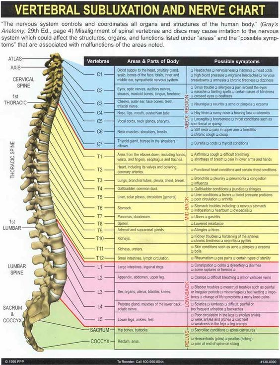 The meric chart Chiropractic is MUCH MORE than neck and back pain. Every cell, tissue, and organ within your body is controlled by your nervous system. If there is disruption between your brain and the rest of your body, there is absolutely NO WAY you can be healthy...: